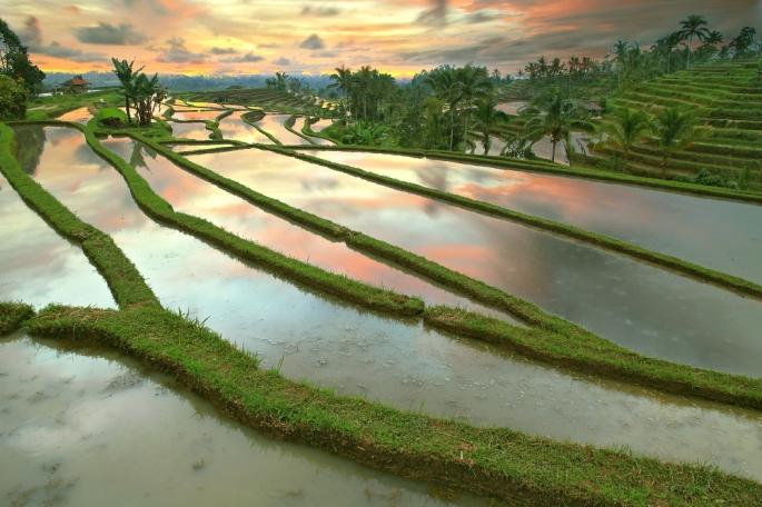 jati-luwih-rice-terrace-05
